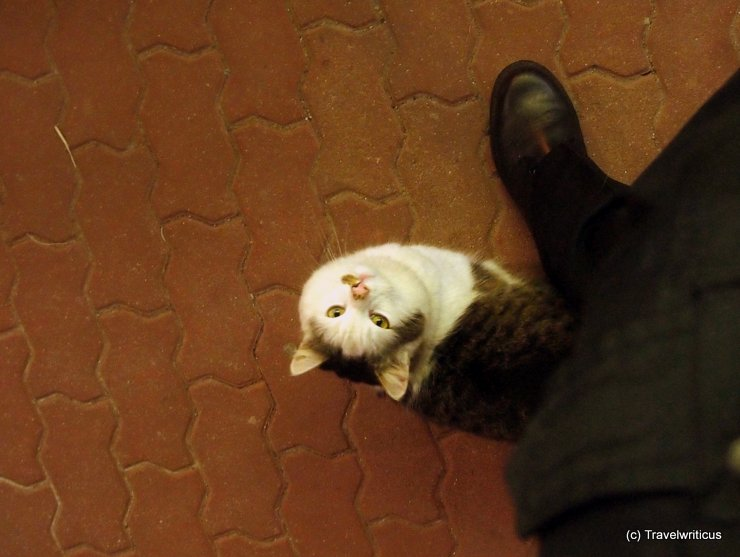 A friendly cat at the railway station of Friedberg