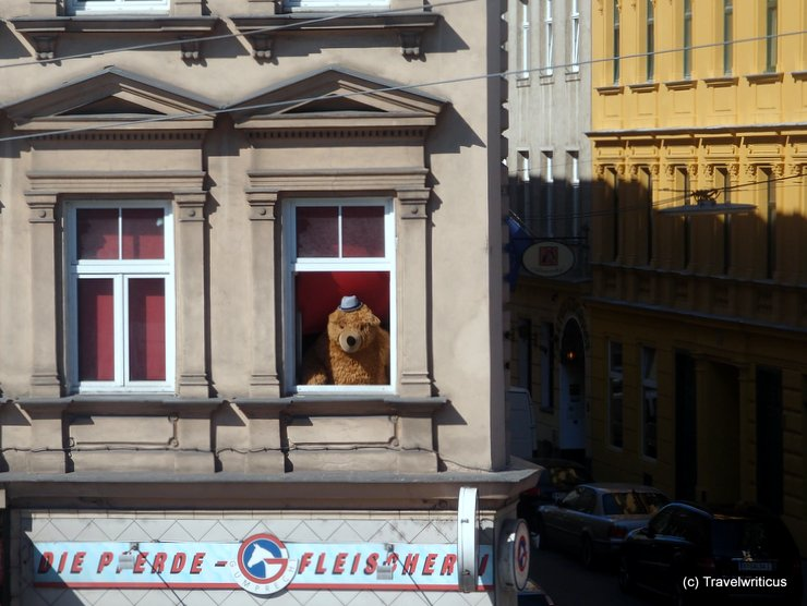 Bear at a window in Vienna, Austria