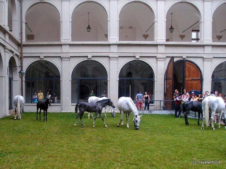 Lipizzan horses at the Stallburg in Vienna, Austria