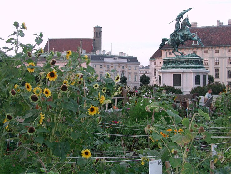 Sunflowers in front of Archduke Charles